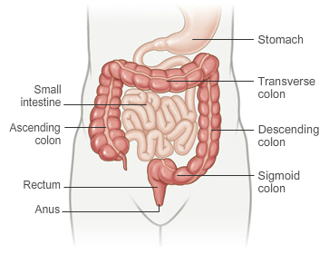 Normal Colon