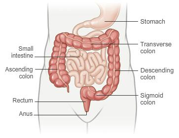 Normal Colon