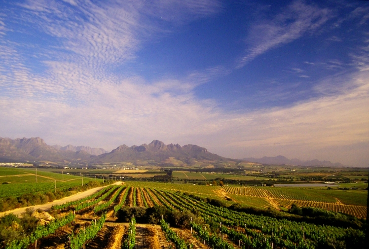 Vineyards-with-Simonsberg.jpg